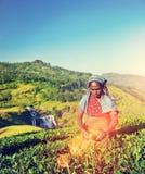 Concetto del raccolto del tè del raccolto dell'agricoltore di agricoltura Immagini Stock