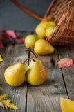 Concetto del raccolto di autunno - pere gialle organiche mature fresche con le gocce di acqua sulla tavola di legno rustica, fond Fotografia Stock