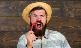 Concetto del raccolto del pepe L'agricoltore rustico in cappello di paglia gradisce il gusto piccante Agricoltore che presenta pe immagine stock