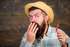 Concetto del raccolto del pepe L'agricoltore rustico in cappello di paglia gradisce il gusto piccante Presentazione dell'agricolt immagine stock
