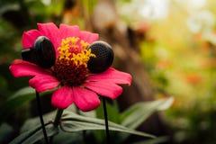 Concetto del trasduttore auricolare e del fiore immagini stock libere da diritti