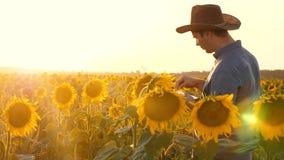 Concetto dell'affare agricolo l'uomo dell'agronomo vede il campo di fioritura del girasole Uomo d'affari con i controlli della co archivi video