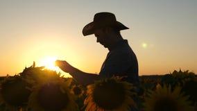 Concetto dell'affare agricolo La siluetta di un uomo dell'agronomo insiste i fiori ed i semi del girasole Uomo d'affari video d archivio