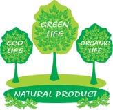 Concetto dell'albero di Eco Paesaggio del prodotto biologico Fotografia Stock