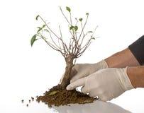 Concetto dell'ambiente con un albero Fotografie Stock