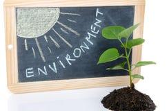 Concetto dell'ambiente con una piccola pianta verde ed il sole Fotografia Stock Libera da Diritti