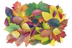 Concetto della bandiera di autunno Fotografia Stock Libera da Diritti