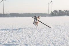 Concetto della cassaforte per produzione di energia degli animali e dell'ambiente Immagine Stock