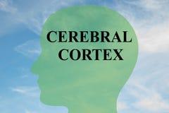 Concetto della corteccia cerebrale royalty illustrazione gratis