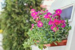 Concetto della decorazione dei fiori e delle erbe del caffè della via Immagine Stock