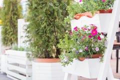 Concetto della decorazione dei fiori e delle erbe del caffè della via Fotografie Stock