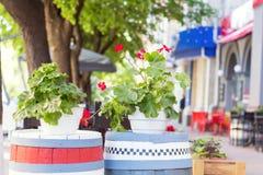 Concetto della decorazione dei fiori e delle erbe del caffè della via Immagini Stock