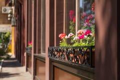 Concetto della decorazione dei fiori e delle erbe del caffè della via Fotografie Stock Libere da Diritti