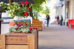 Concetto della decorazione dei fiori e delle erbe del caffè della via Fotografia Stock Libera da Diritti