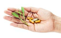 Concetto della medicina di erbe e di sanità alternativa Chiuda sulla f Fotografia Stock