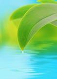 Concetto della natura con il foglio e il waterdrop Fotografia Stock