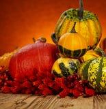 Concetto della natura di autunno Immagini Stock Libere da Diritti