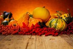 Concetto della natura di autunno Fotografia Stock Libera da Diritti