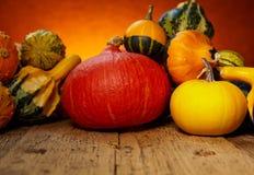 Concetto della natura di autunno Fotografia Stock
