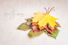 Concetto della natura di autunno Frutta e verdure di caduta Immagine Stock