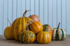 Concetto della natura di autunno Zucche differenti di caduta sopra Fotografie Stock