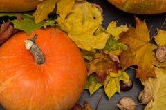 Concetto della natura di ottobre con le zucche, le noci e le foglie di autunno Fotografia Stock