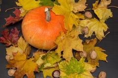 Concetto della natura di ottobre con le zucche, le noci e le foglie di autunno Immagine Stock Libera da Diritti