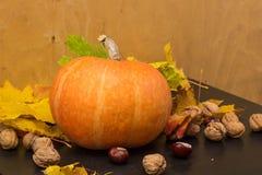 Concetto della natura di ottobre con le zucche, le noci e le foglie di autunno Immagine Stock