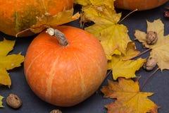 Concetto della natura di ottobre con le zucche, le noci e le foglie di autunno Fotografie Stock Libere da Diritti