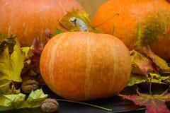 Concetto della natura di ottobre con le zucche, le noci e le foglie di autunno Fotografia Stock Libera da Diritti