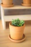 Concetto della pianta da appartamento, piante in vaso Fotografie Stock