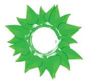Concetto della pianta verde Fotografia Stock