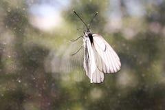 Concetto della prigione Nella prigionia Una farfalla Fotografie Stock