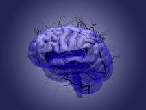 Concetto della radice del cervello di una radice che cresce sotto forma di un reggiseno umano Fotografie Stock