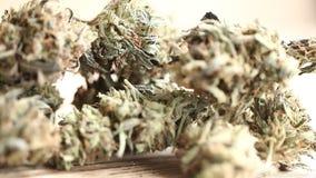 Concetto di affari della cannabis Canapa medica dei semi della marijuana stock footage
