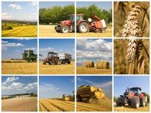 Concetto di agricoltura Fotografia Stock Libera da Diritti