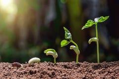 concetto di agricoltura che pianta punto crescente con la natura verde e immagini stock libere da diritti