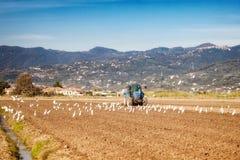 Concetto di agricoltura con il trattore su un campo Fotografia Stock Libera da Diritti