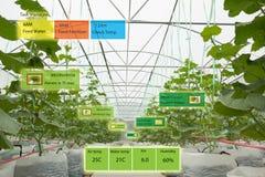 Concetto di agricoltura, uso astuto i artificiale dell'agricoltore o dell'agronomo Fotografie Stock Libere da Diritti