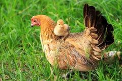 Concetto di amore; Madre e bambino fotografie stock libere da diritti
