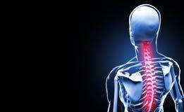 Concetto di anatomia della spina dorsale Fotografie Stock