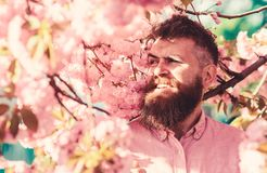 Concetto di armonia Pantaloni a vita bassa in camicia rosa vicino ai rami dell'albero di sakura Uomo con la barba e baffi sul fro fotografie stock