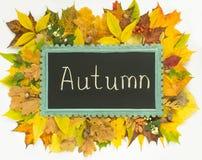 Concetto di autunno Blocco per grafici variopinto dei fogli di autunno Priorità bassa di autunno Lavagna sul fondo delle foglie d Fotografia Stock Libera da Diritti