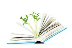 Concetto di conoscenza con i libri Fotografia Stock