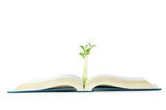 Concetto di conoscenza con i libri ed il semenzale Fotografie Stock Libere da Diritti