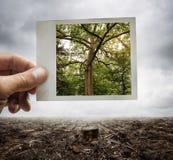 Concetto di conservazione dell'ambiente immagini stock