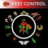 Concetto di controllo dei parassiti illustrazione di stock
