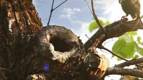 Concetto di cura della famiglia: tempo dell'alimentazione degli uccelli dello storno stock footage