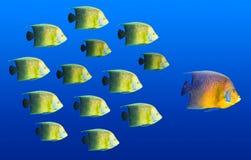 Concetto di direzione - grande piombo dei pesci Fotografia Stock