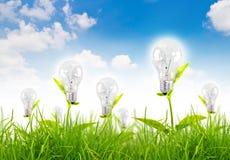 Concetto di Eco - la lampadina si sviluppa nell'erba. Fotografie Stock